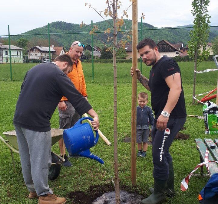 Zasajanje dreves